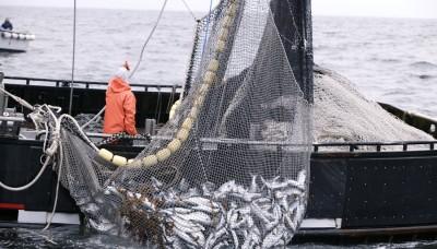 Incautan 42 toneladas de recursos marinos en tallas no aptas para la comercialización