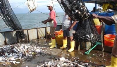 IMARPE realizará labores de monitoreo de la anchoveta frente a la costa de Chimbote