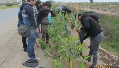 Se reforestó el cerco de los Pantanos de Villa con apoyo de empresa privada