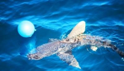 Un tiburón obliga a detener ejercicios navales a la flota china