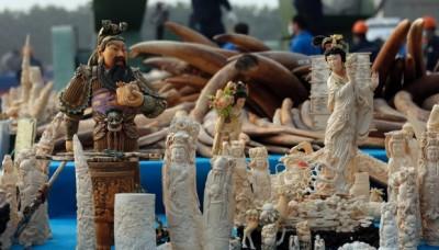 El documentalista David Attenborough le pide al presidente de China que detenga la extinción del elefante africano