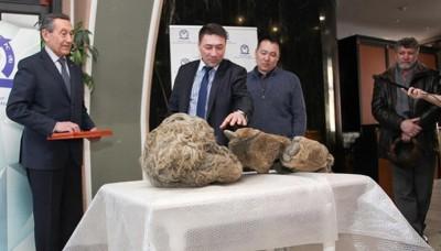Rusia: Encuentran los restos del primer rinoceronte lanudo