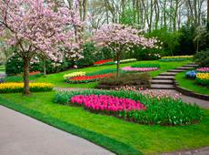Paisagismo em espa os p blicos benef cios para cidades e for Plantas decorativas amazon