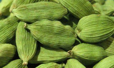 Cardamomo - Especial Especiarias