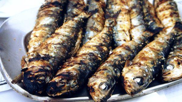As sardinhas portuguesas