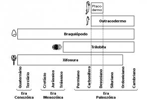 braquiopido