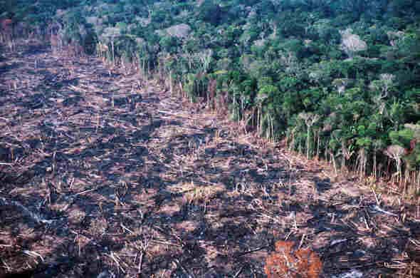 Queimadas e desmatamento