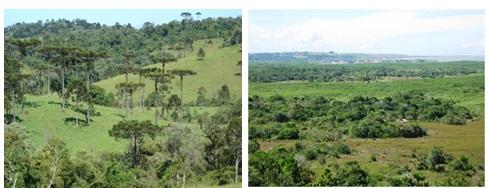 Exemplos de ecossistemas terrestres.