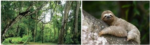 Exemplos de animais e plantas da floresta tropical.