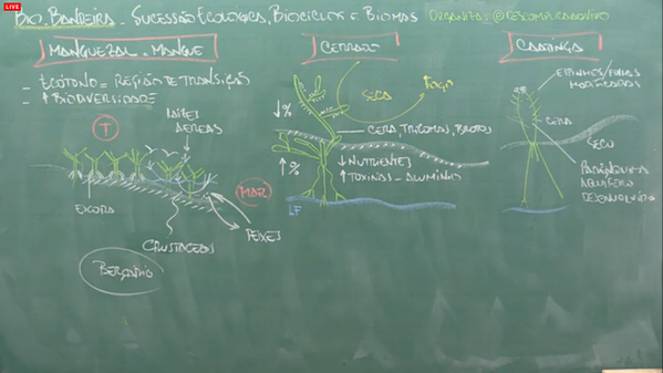 bio-sucessao ecologica4