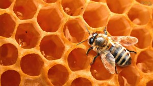 Colmeia confeccionada com cera produzida pelas abelhas