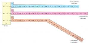 Estrutura molecular de um glicerídio formado por 3 ácidos graxos diferentes