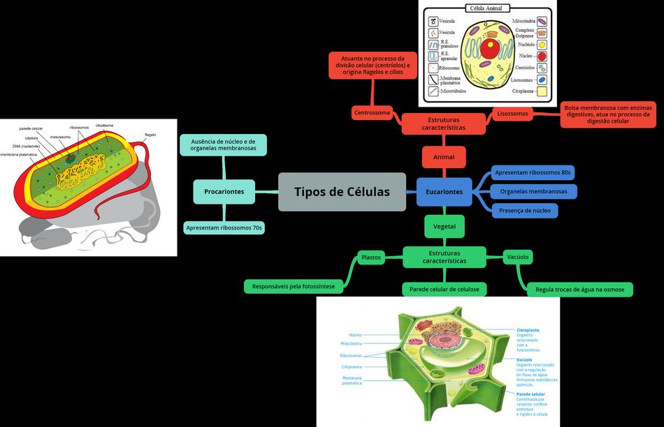 mapa-bio-helio-tipos-celula