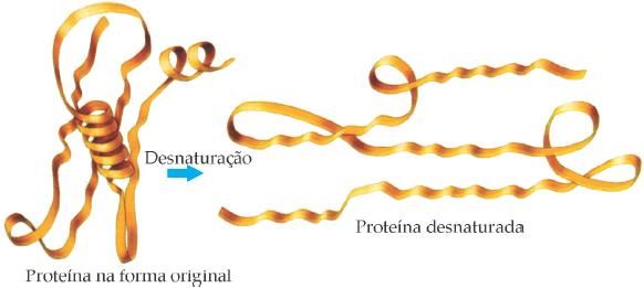 Resultado da desnaturação de uma proteína