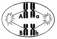 bio01