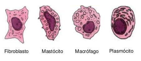 Tipos de células do TCPD