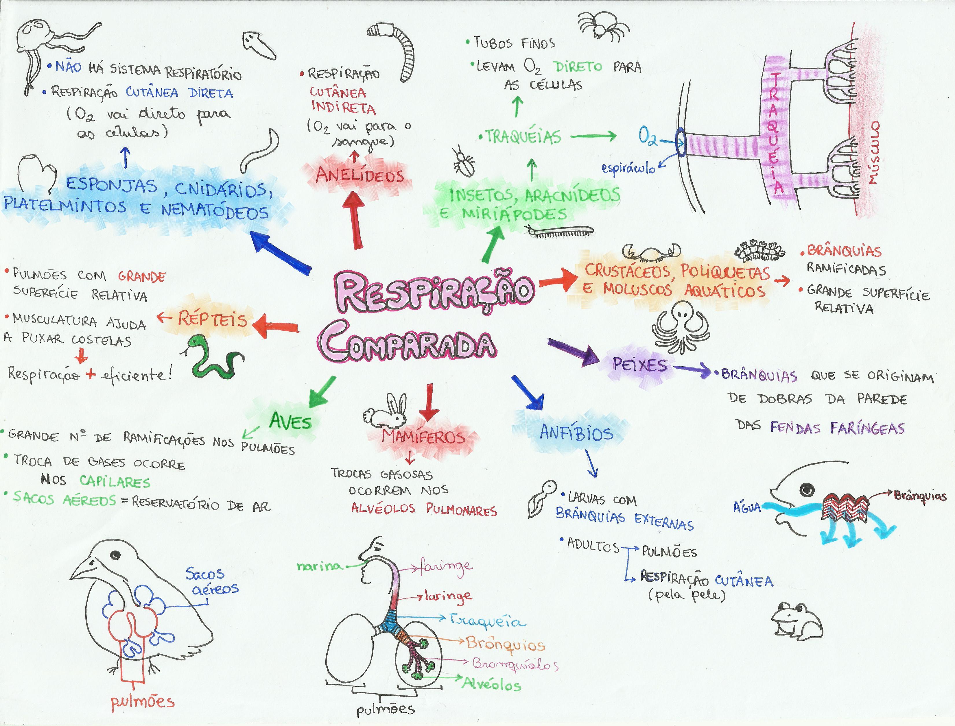 Mapa Mental: Respiração Comparada
