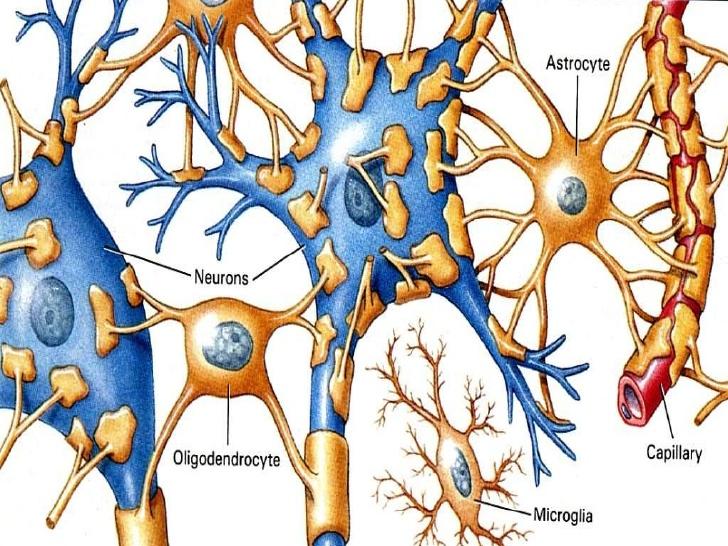 Células gliais