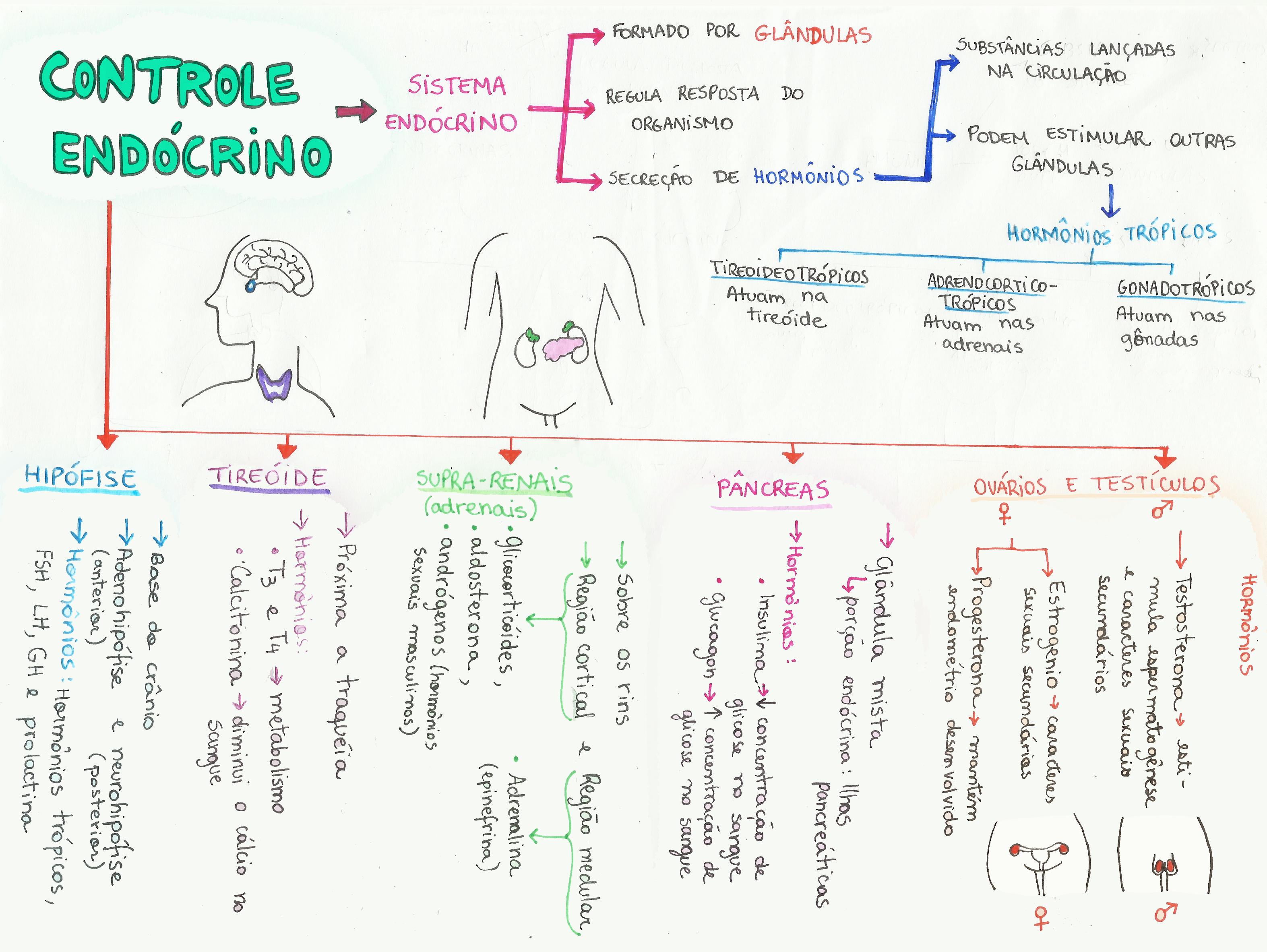 mapa-bio-controle-endocrino