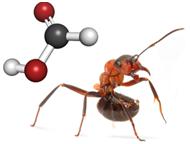 O ácido fórmico é encontrado nas formigas