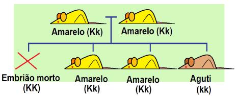 Cruzamento de camundongos amarelos.