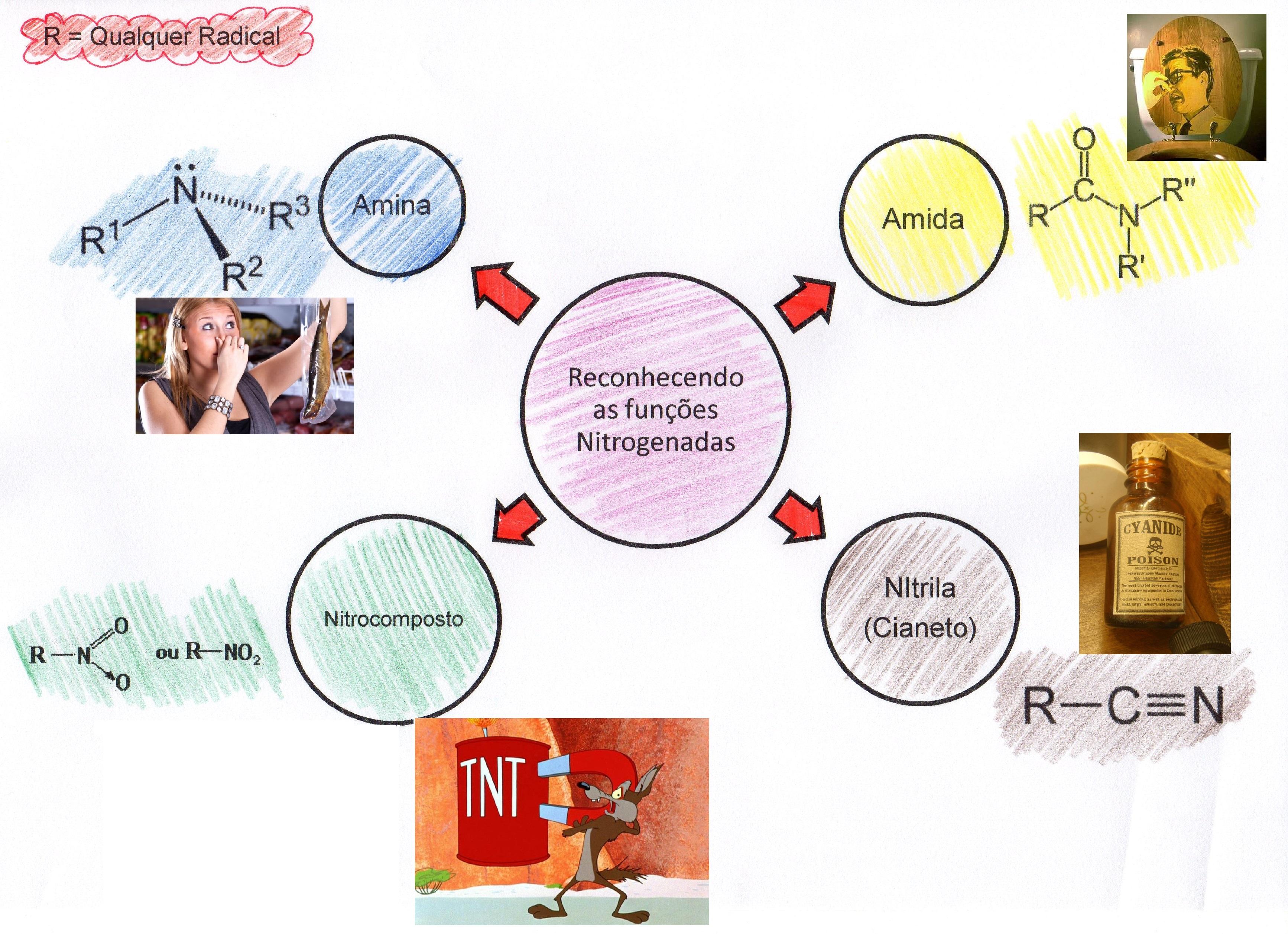 funções nitrogenadas