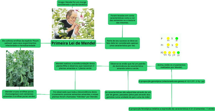 Mapa Mental: Primeira Lei de Mendel