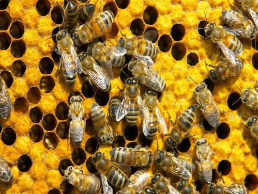 Um clássico exemplo de sociedade é a relação das abelhas.