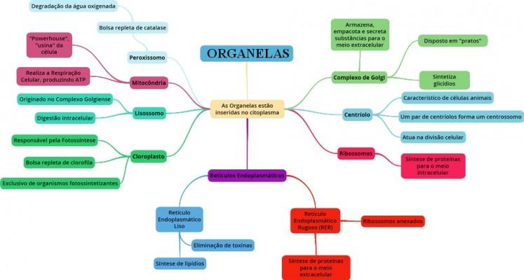 Mapa Mental: Organelas