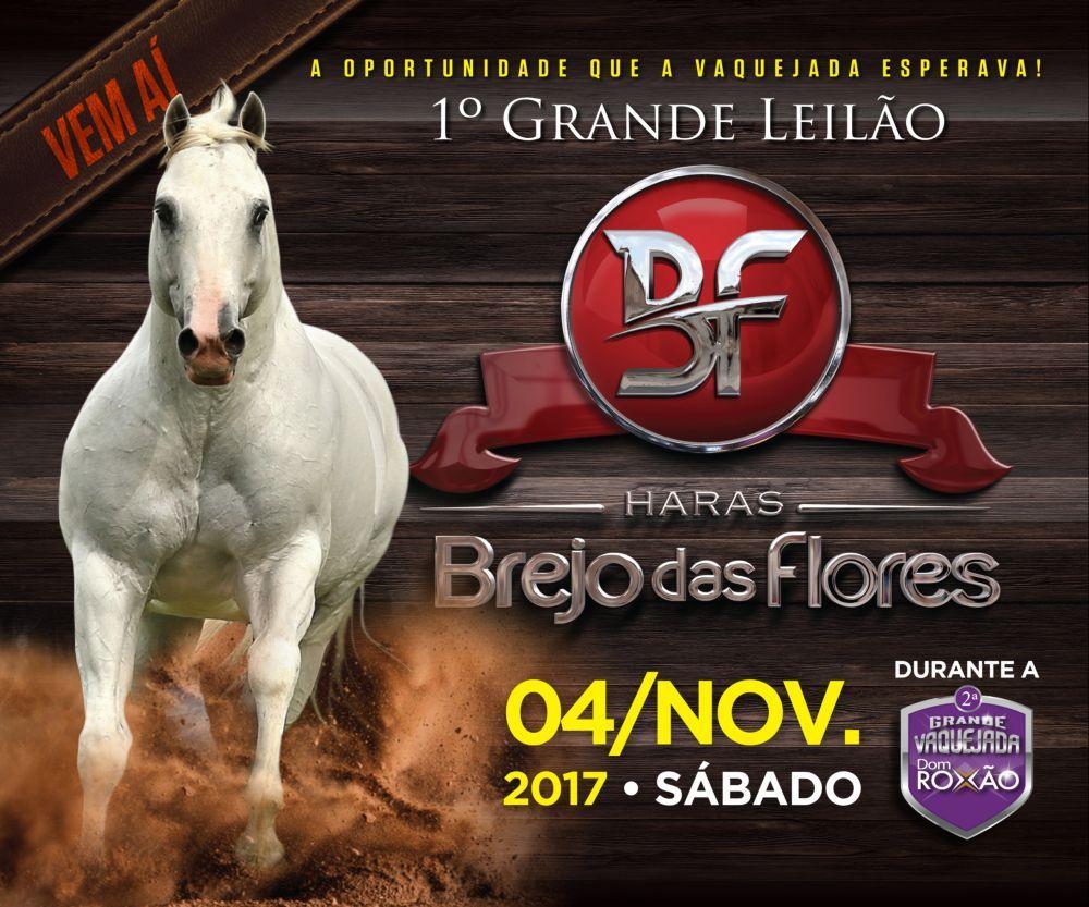 2017-11-leilaoharasbrejodasflores
