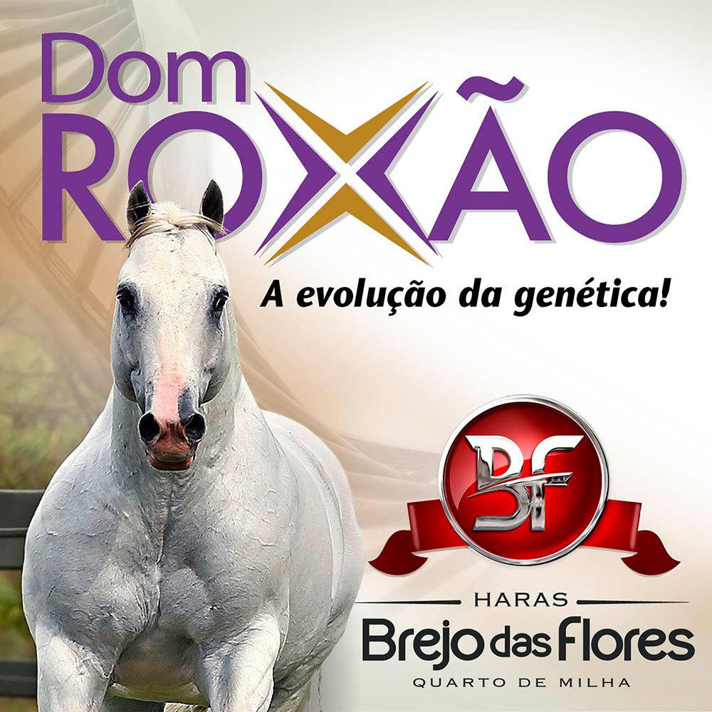 Dom-roxa-eternalady