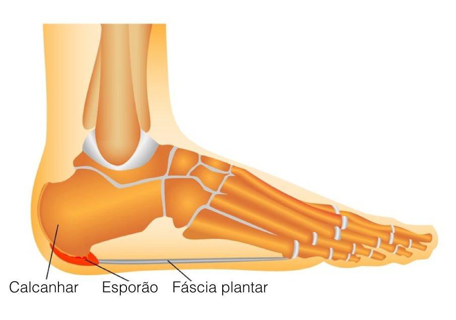 anatomia esporao calcaneo
