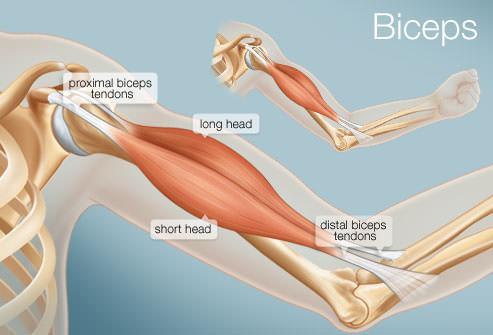 dor do ombro tendinopatia do biceps