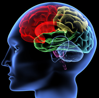 acupuntura mecanismos cerebrais