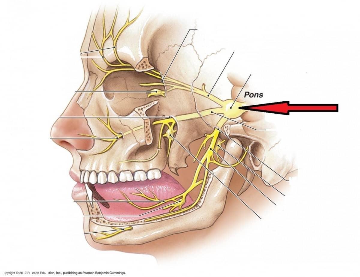 O que é Neuralgia do trigêmeo? O que causa a Neuralgia do trigêmeo?