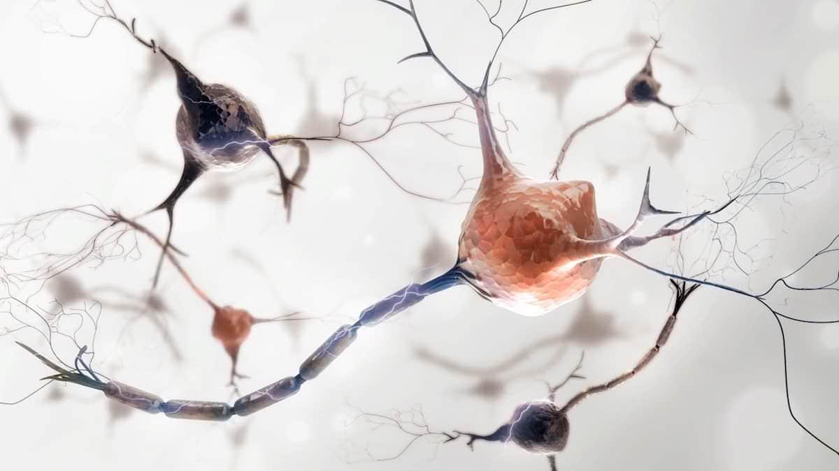 Nervos ComprimidosPodem Causar Dor nas Costas e Pescoço
