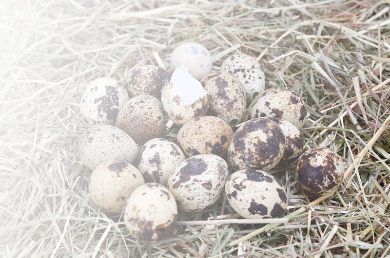 Huevos carnes y cenizas web