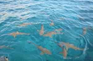 16 shark feeding overview 16