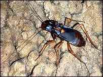 40659763 203bi roach nature A maior barata do mundo!