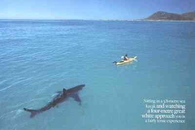 8mGreatWhite O homem amigo do Tubarão