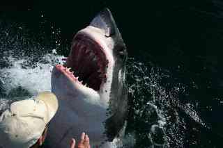 8mGreatWhite001 O homem amigo do Tubarão