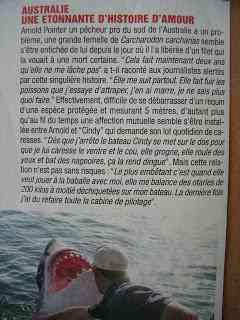 Amourderequine21 O homem amigo do Tubarão