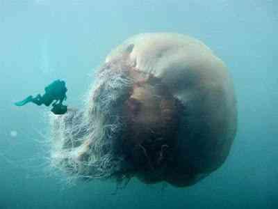 MonstroMarinho Monstro marinho