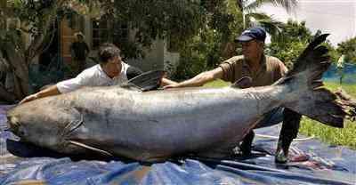 050629 catfish hmed 9a.hmedium Histórias de pescador