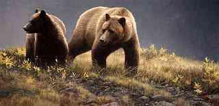 Grizzlies Robert Bateman   O fotógrafo de mão cheia
