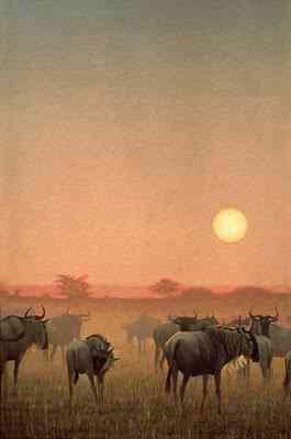 WildebeestSunset Robert Bateman   O fotógrafo de mão cheia