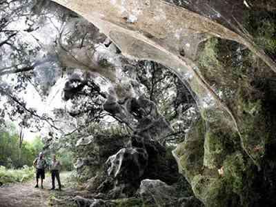 giant spider web Teia de aranha gigante