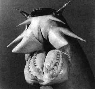 hagfish Os animais mais estranhos e esquisitos do mundo