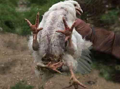 e40b3a5ef7ba70c697417f9ecbf92280 strange animals strange creatures Os incríveis Bichinhos do Mundo Gump