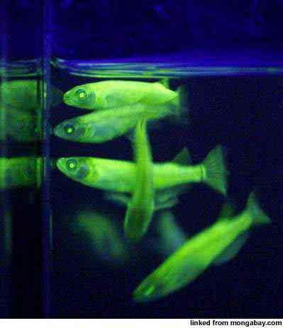 reuters fishglow 399x450 Os incríveis Bichinhos do Mundo Gump